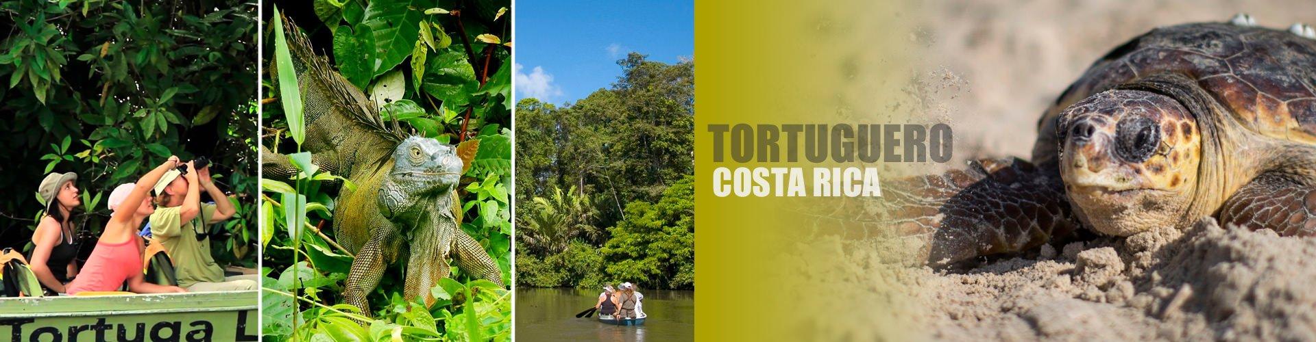 Tortuguero Excursions