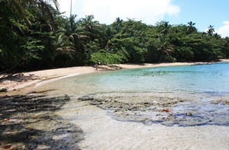 Day 2 Gandoca Manzanillo Reserve Jungle Hike - Caribbean Coast Explorer