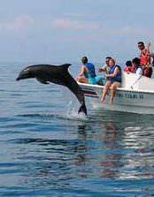 Dolphin Watching & Snorkeling