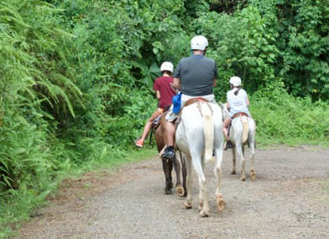 Horseback Riding Slide 1 1 - Manuel Antonio Tocori Waterfalls Horseback Tour