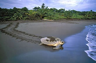 Optional add on to Tortuguero - Pacific Caribbean Trek