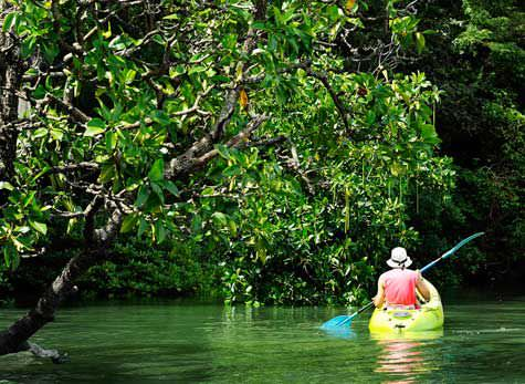 River and Sea Kayaking with Rainforest Hike 1 - River & Sea Kayaking with Rainforest Hike