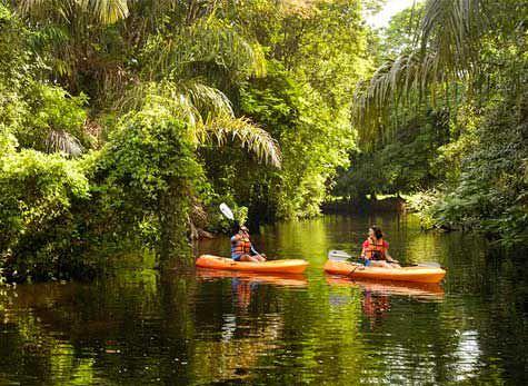 Tortuguero Canal Banana Plantation 1 - Tortuguero Canals & Limon Bonita beach
