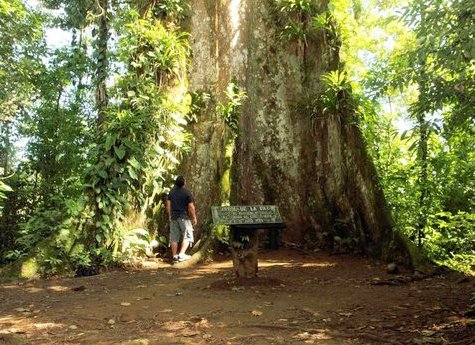 La Ceiba Tour 4 - La Ceiba Reserve - Day Tour