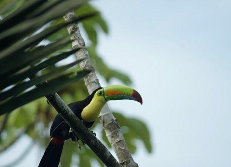 La Ceiba Tour 5 - La Ceiba Reserve - Day Tour