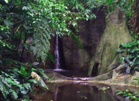 La Ceiba Tour - La Ceiba Reserve - Day Tour