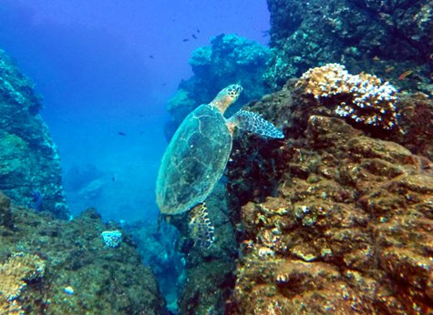 Caño Island 03 - Caño Island Snorkeling