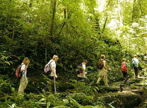06 - Guided Hike in the Monteverde Cloud Forest Reserve