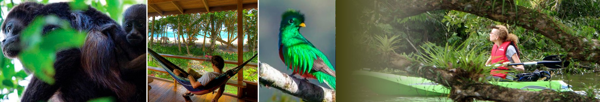Wildlife Costa Rica  - Wildlife spotting tips while in Costa Rica