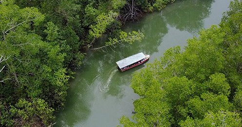 CFT damas Mangrove - Pacific Coast Tours