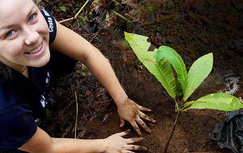 Plant a Tree 2 - Caribe Scenic Flights