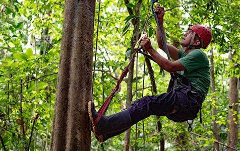 Tree Climbing2 - Caribe Scenic Flights