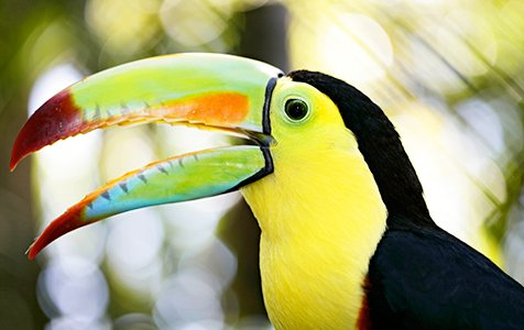 Birdwatching SB - Caribe Scenic Flights
